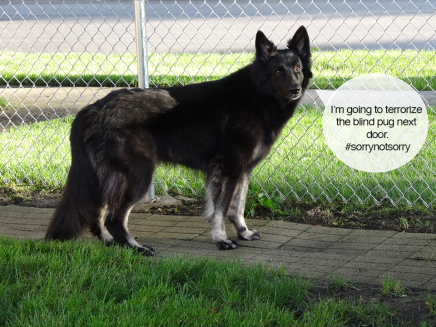 20 Things All Dog Owners Know To BeTrue